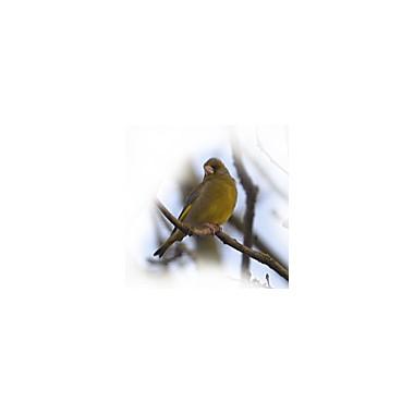 Gr�nfink