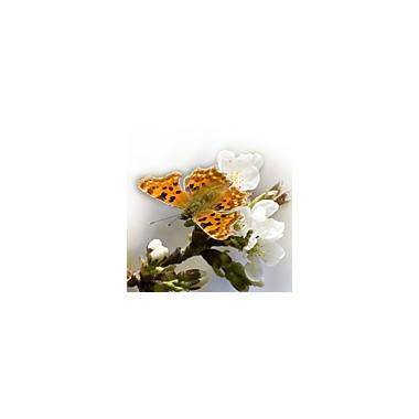 Schmetterlinge - Falter