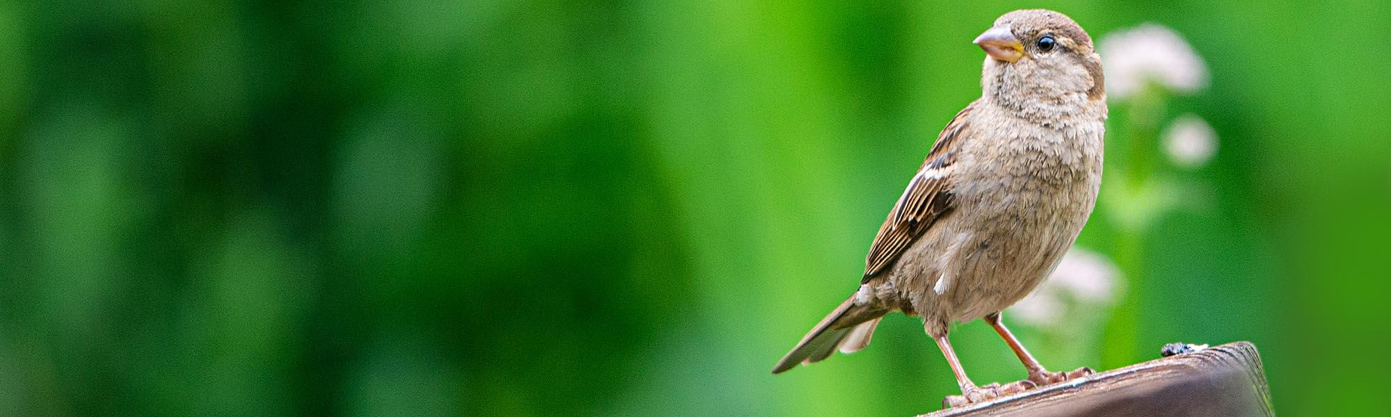 Nistkästen für Singvögel